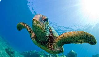 Austell Hotel Georgia Aquarium Vacation Package